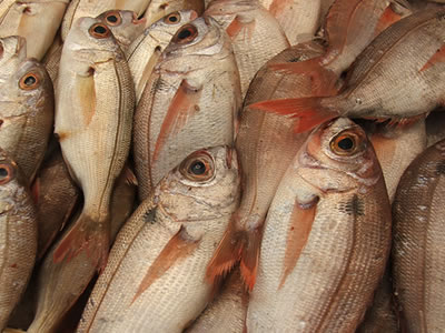Pescados I: introducción 2