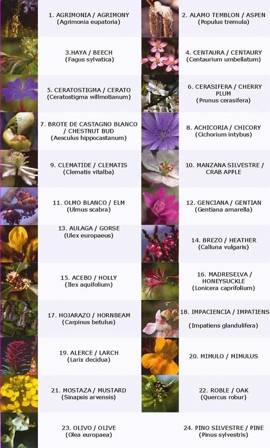 flores de bach para adelgazar cuales son los 10
