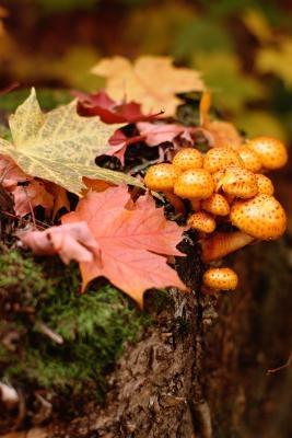 Cómo Eliminar los hongos del árbol