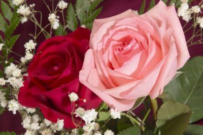 Cuidar el crecimiento de las rosas