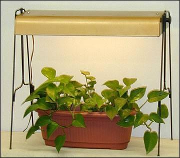 Cultivo de plantas con luz artificial