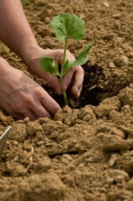 Restablece y Enmienda el suelo ácido