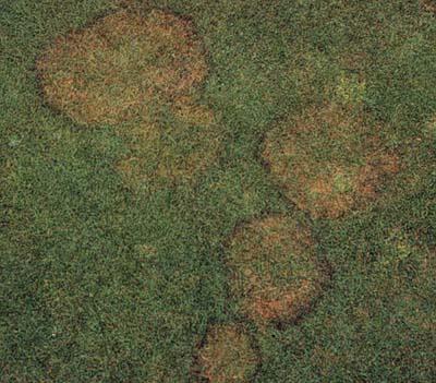 Deshacerse del moho en el c sped iorigen for Hongos en el cesped jardin