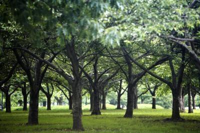Tipos de hierba que crecen bajo los árboles