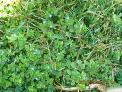 C mo matar la mala hierva en primavera iorigen for Como evitar que salga hierba en el jardin