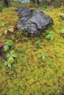 Eliminar el musgo del c sped iorigen for Eliminar hormigas del jardin