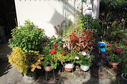 c mo proteger las plantas al aire libre iorigen On desarrollo de plantas al aire libre