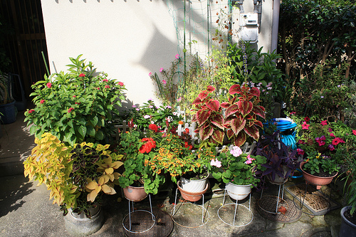 c mo proteger las plantas al aire libre iorigen
