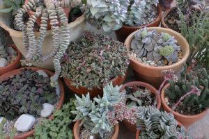 Jardines verticales de suculentas 1