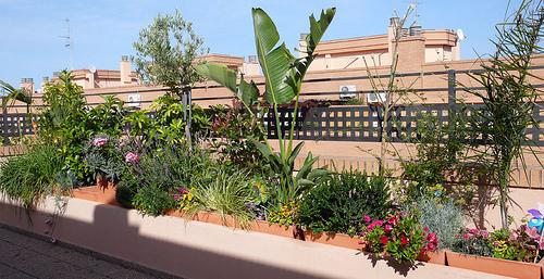 Decoraci n de terrazas con plantas iorigen - Plantas para terraza con mucho sol ...