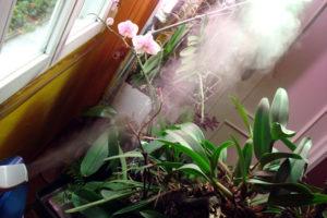 La humedad, Plantas de interior 2
