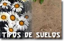 El suelo arenoso, Plantas de interior 1