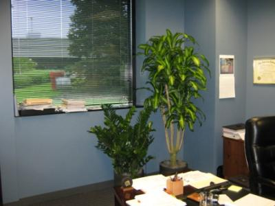 Plantas en la oficina iorigen for Plantas decorativas para oficina