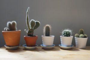 Cactus y variedades