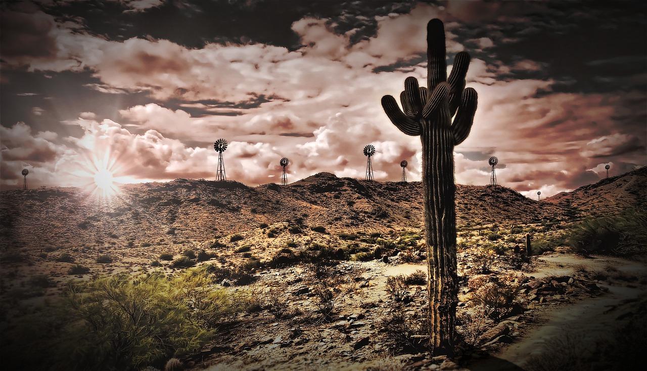 cactus candelabro