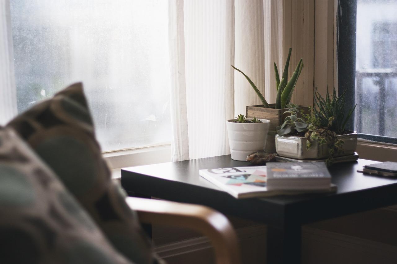 Cactus en el hogar