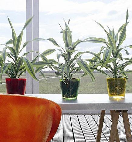 Plantas para el salon c lido pero luz indirecta iorigen - Plantas para el salon ...