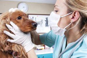 Buenos hábitos,con ayuda el veterinario 1