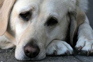 Los animales también pueden sufrir depresión 1