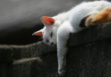 Si tu mascota es un gato, vacaciones 6