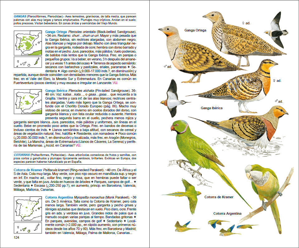 Ejemplo de nombres de aves