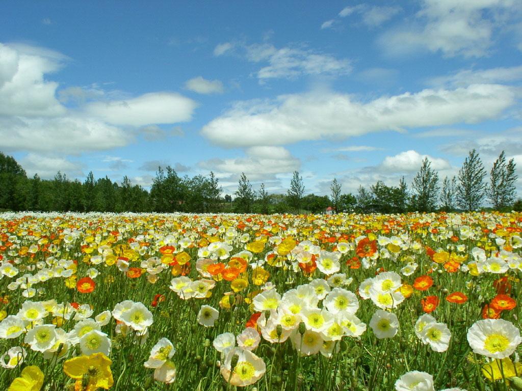 ¿Qué significa soñar con un campo de flores?