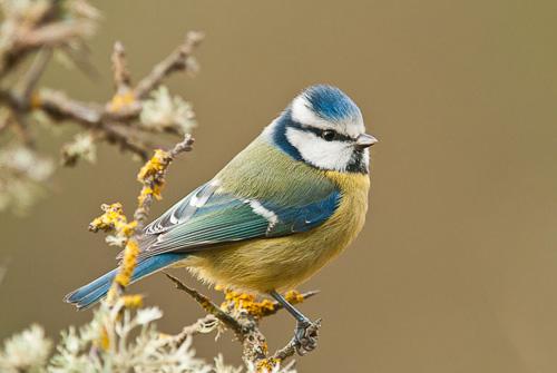 Fotografías de aves