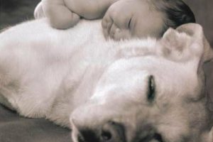 Prevenir infecciones en bebes, el secreto convivir con perros 6