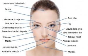 Partes del rostro