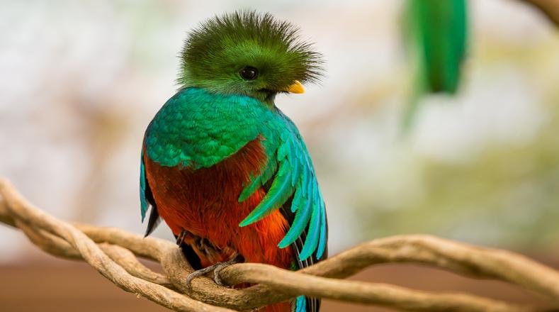 Aves exóticas en peligro de extinción