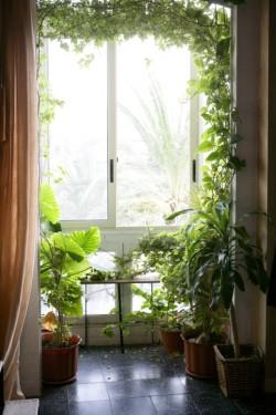 Excelentes beneficios de tener plantas en casa