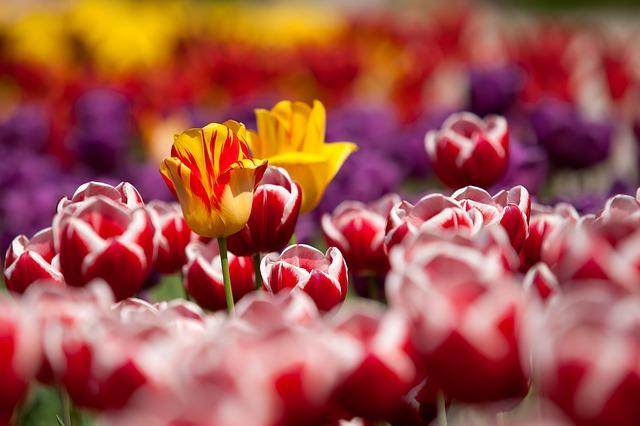 Conoce el significado de las flores