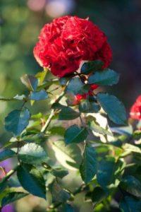 Ideas para plantar flores en los jardines