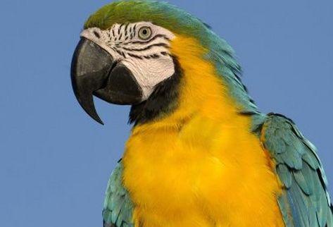 Elegir un buen ejemplar de ave