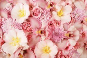 Descubre como transplantar orquídeas