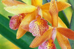 Cómo escoger macetas para orquídeas 1