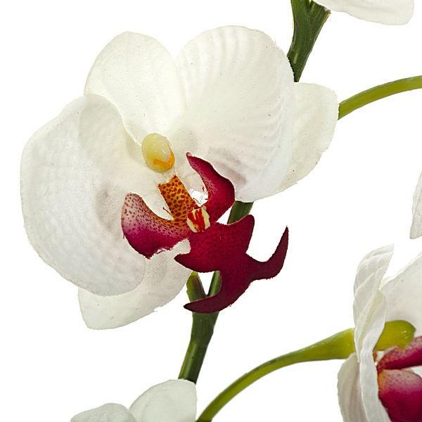 Orquídeas blancas ¿cómo se cuidan?