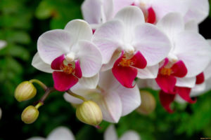 ¿Cuál es el mejor abono para orquídeas?