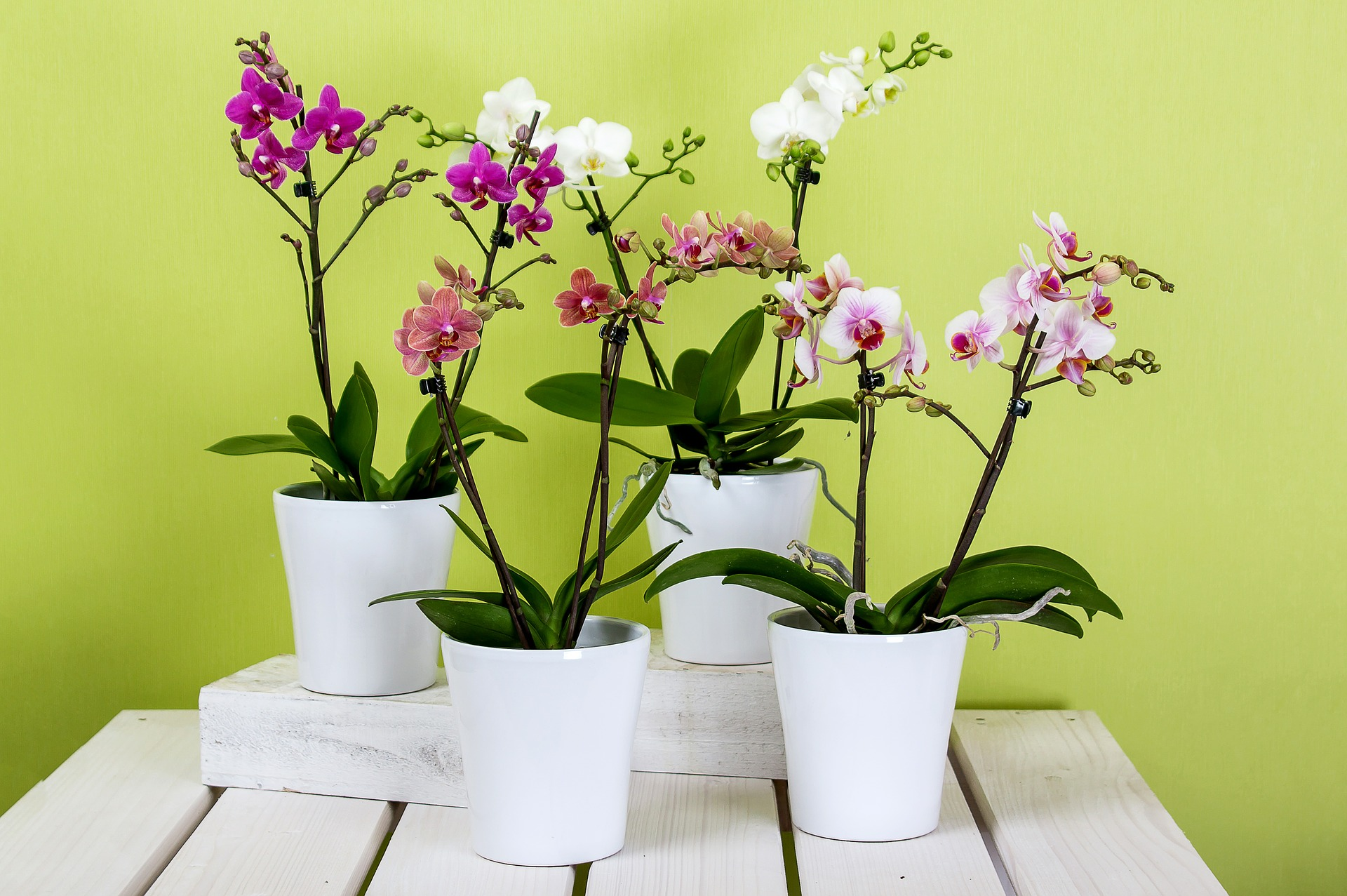 orquídeas en macetas