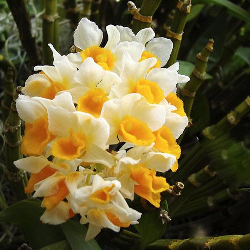 ¿Cómo cuidar las orquídeas exóticas?