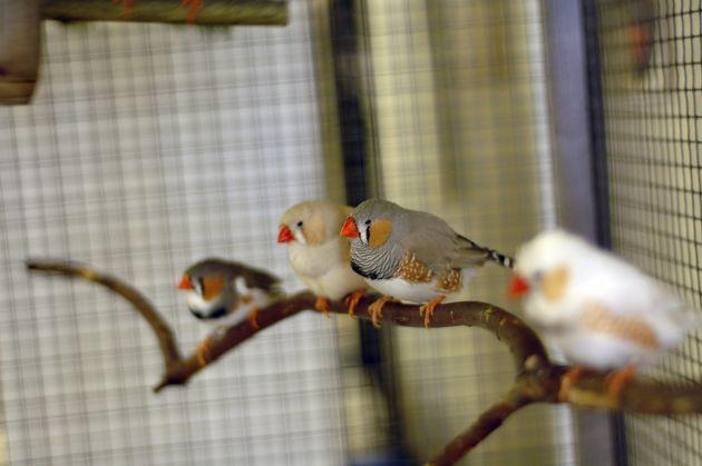 decorar las jaulas para aves