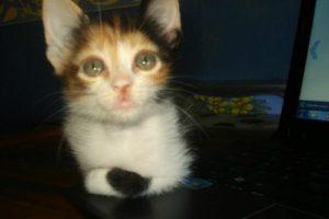 dientes-de-leche-perros-gatos