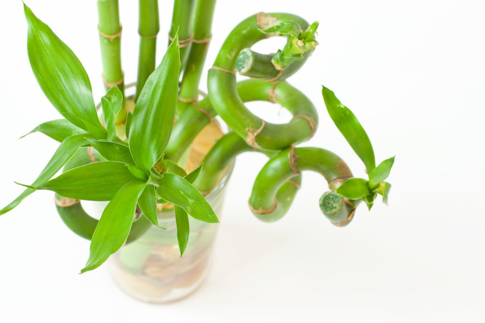 bambu alta calidad
