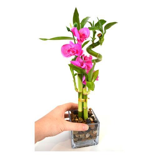 bambu con flor