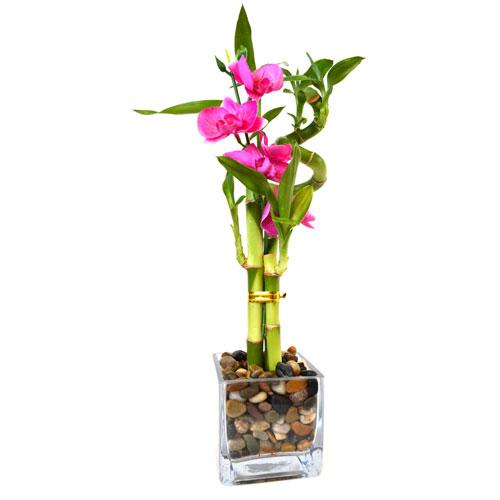 bambu con flores