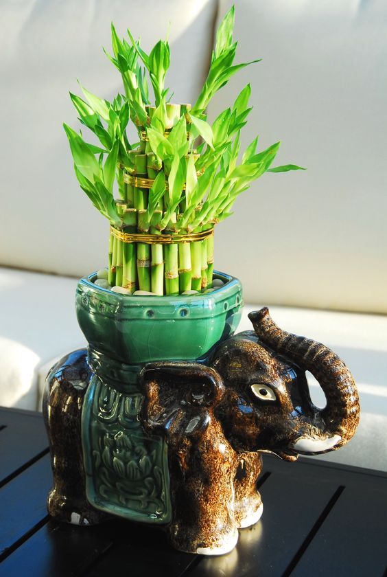bambu elefante de la suerte