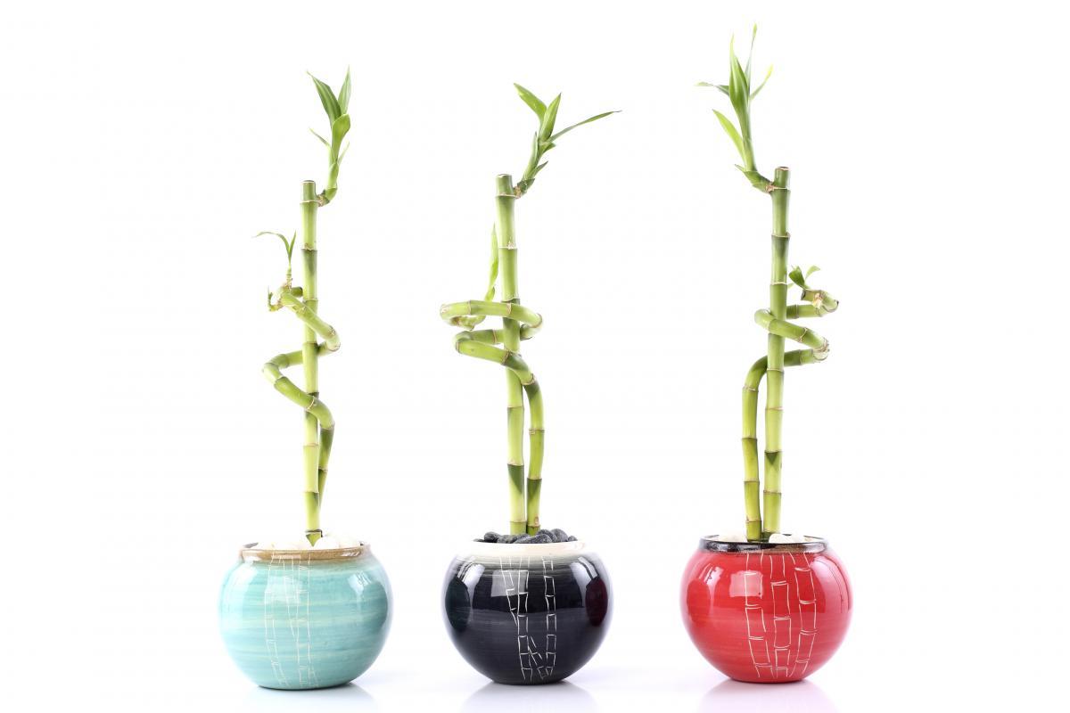 bambu jarrones varios colores