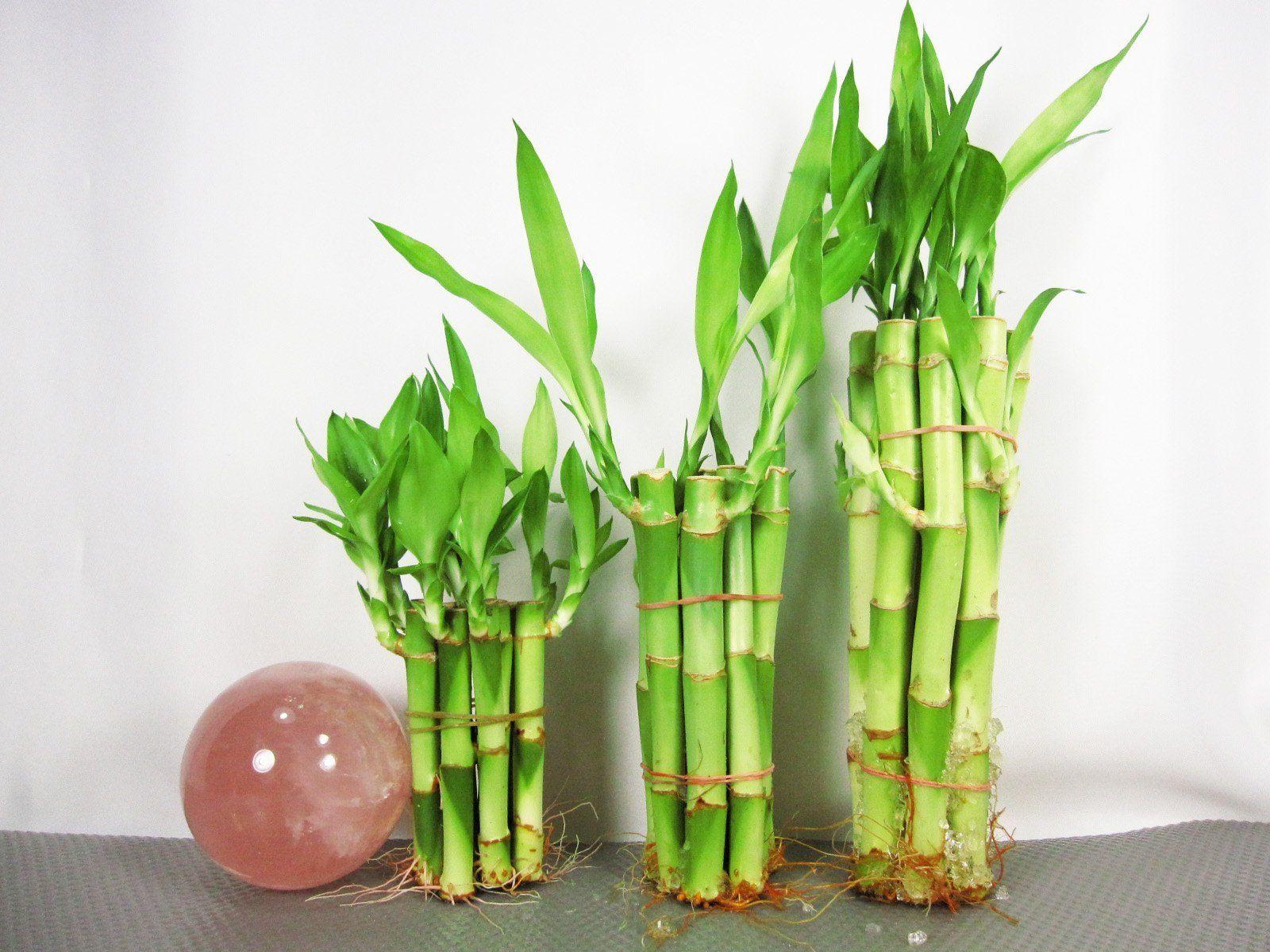 bambu varias formas
