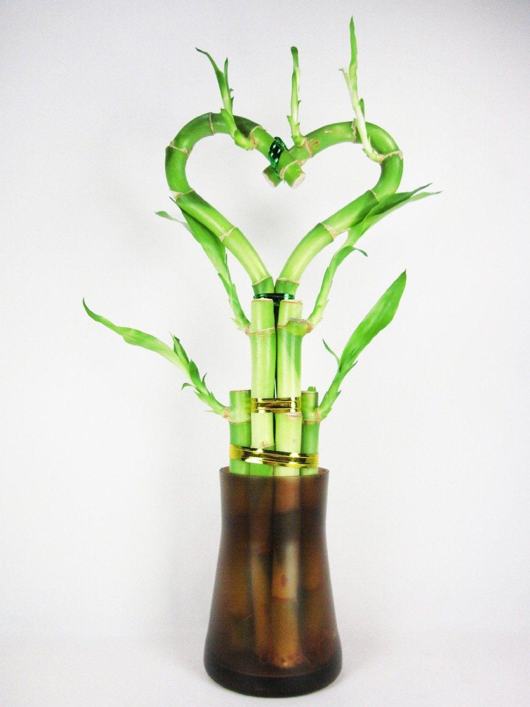 corazon bambu de la suerte