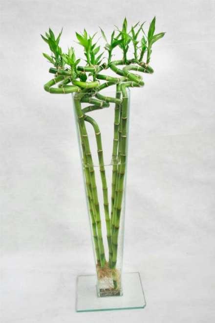 imagen bambu de la suerte